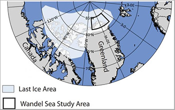 The Wandel Sea is inside what's known as the 'Last Ice Area' in the Arctic Ocean.