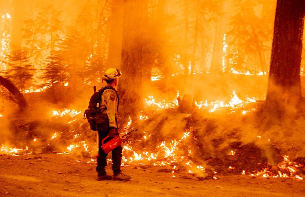 A Cal Fire firefighter uses a drip torch to light a backfire in an effort to stop the spread of the Dixie fire