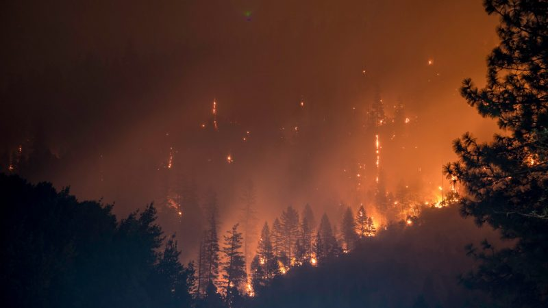 The 2021 IPCC report: Dark forest with orange flames and smoke.