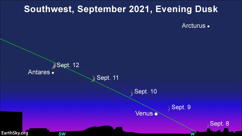 Very slanted line of ecliptic with 4 positions of thin crescent moon, with Venus and Antares.