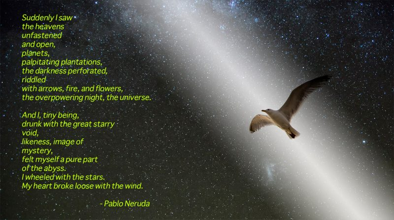 Pablo Neruda poem printed over starry scene with seagull flying in a beam of light.