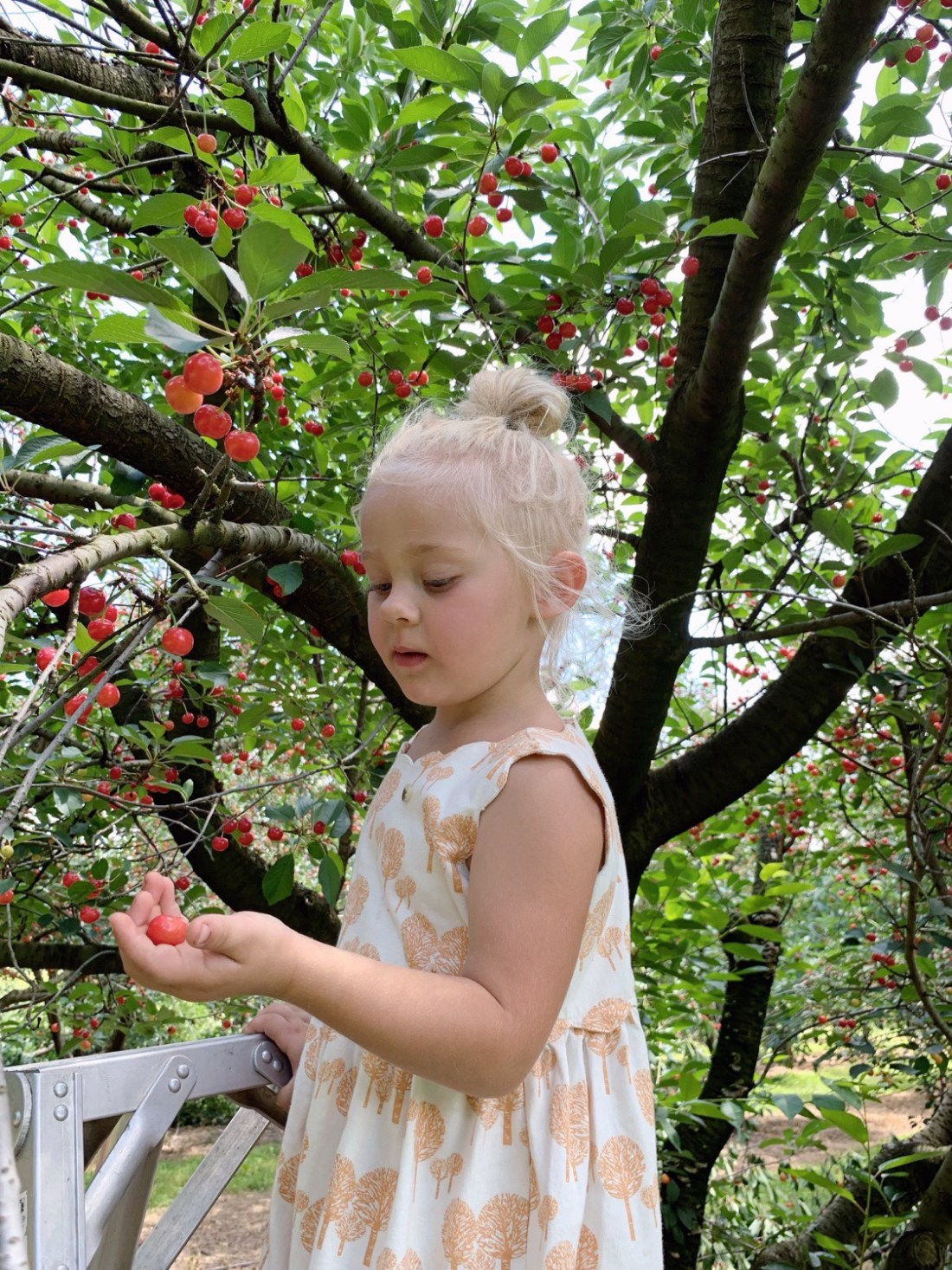 cherry picking | mother of beees