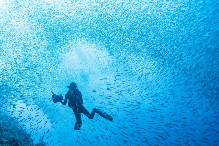 amy in sardines_1