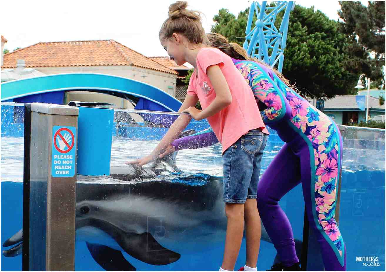 Dolphin Assisting - Sea World