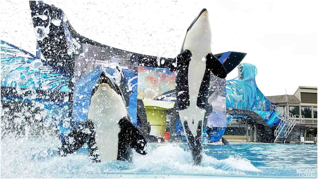 Orca Show - Sea World