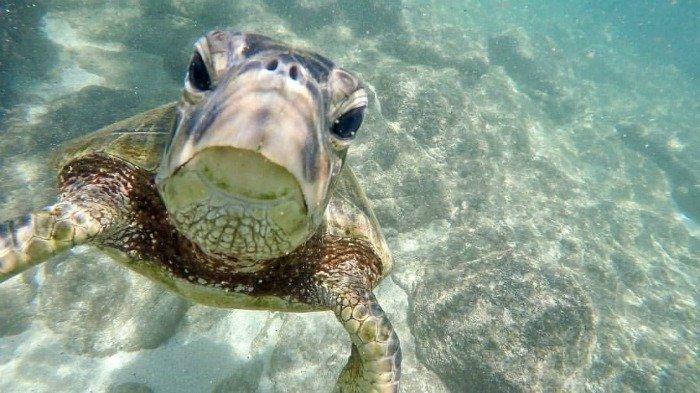 Maui vs Kauai: turtles!