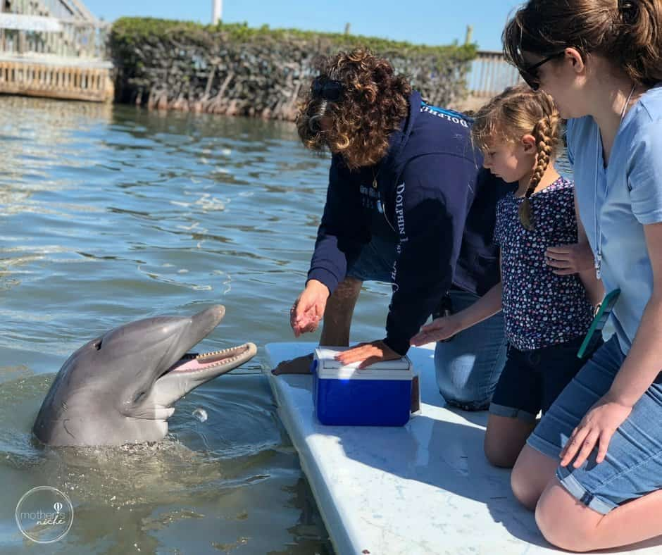 Our Experience at the Dolphin Research Center in the Florida Keys