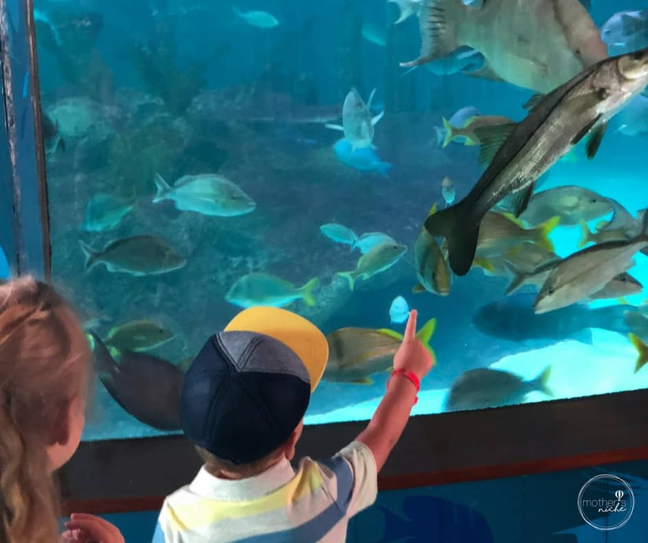 Our trip to the Florida Keys with Kids: Florida Keys Aquarium Encounters