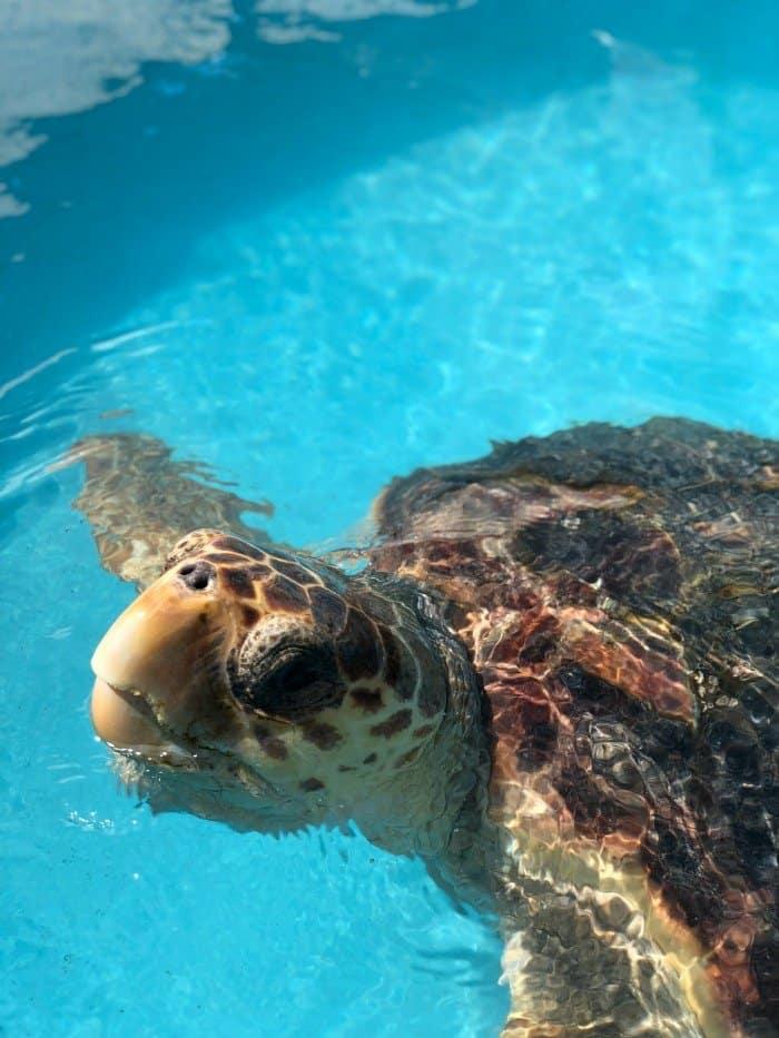 Turtle Hospital in the Florida Keys (Marathon)
