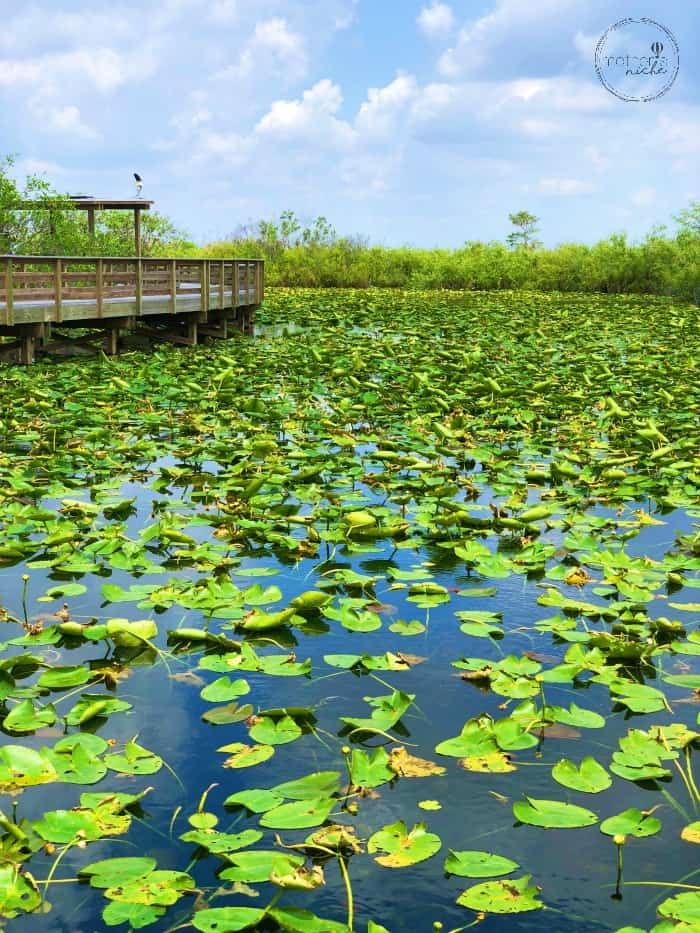 My Favorite Fun Things to Do in South Florida Everglades National Park