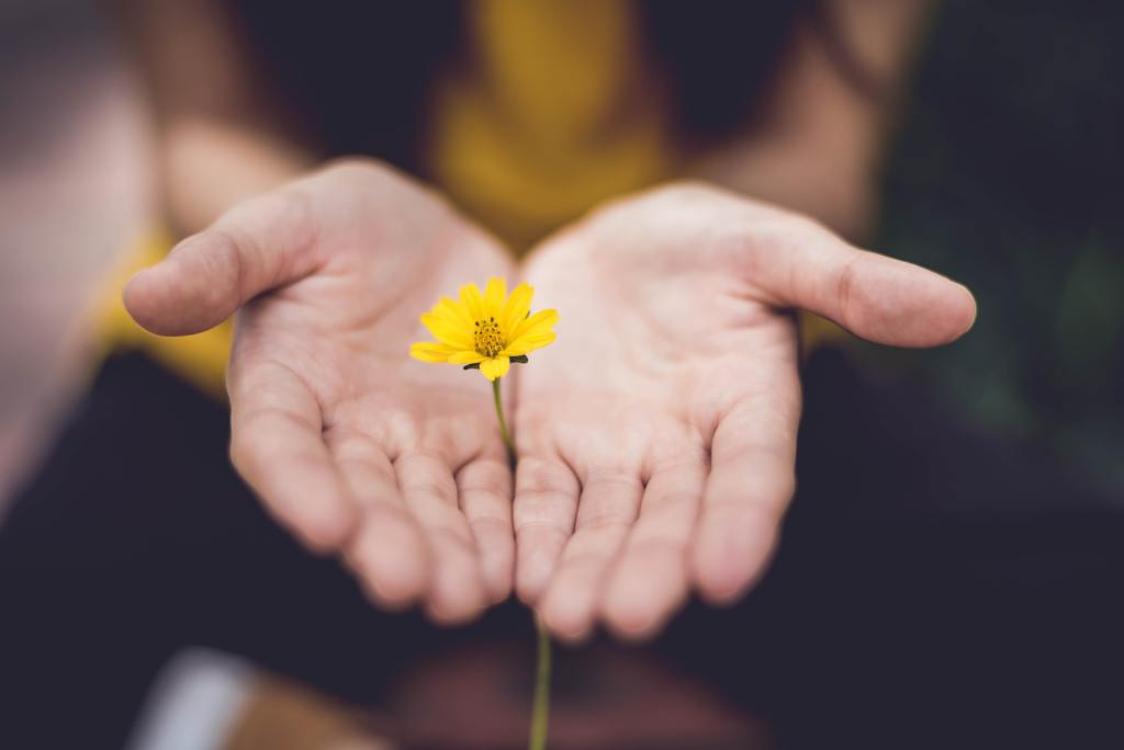 hands together with a yellow flower coming through