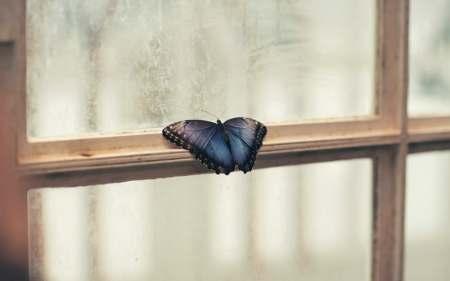 butterfly sitting on window