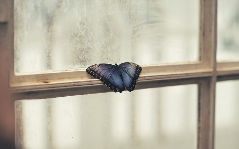 butterfly sitting on window