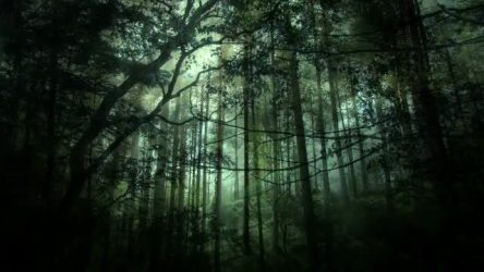 Dark Fantasy Forest Background Stock Motion Graphics Motion Array