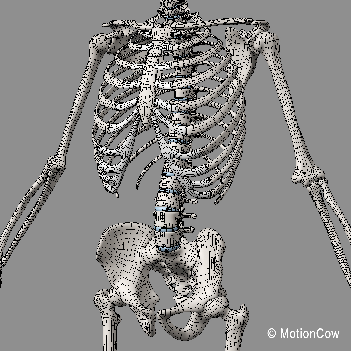 Muscles Amp Skeleton Rigged Motioncow
