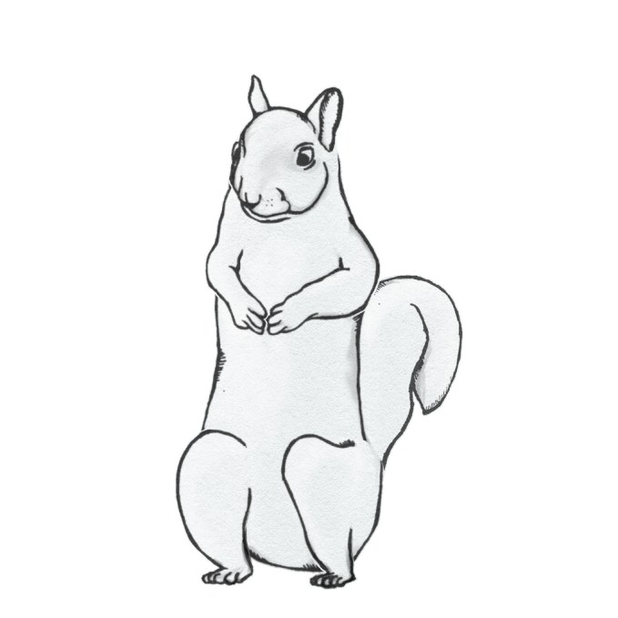 SquirrelFront-03