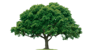 tree_PNG2517