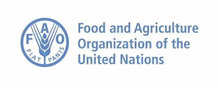 FAO internship