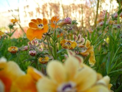 Flowers at Getty Center