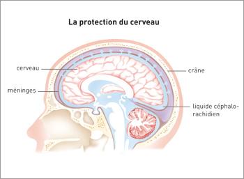 23729_protection_du_cerveau