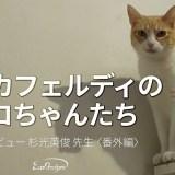 ネコカフェルディのネコちゃんたち——インタビュー 杉光英俊 先生〈番外編〉