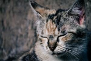 ネコ耳カット