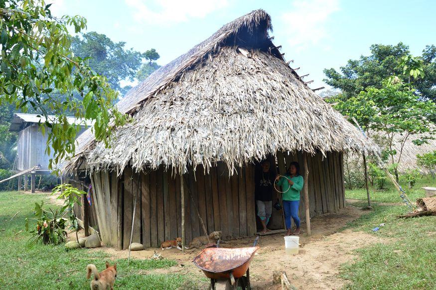 Дом в Амазонском тропическом лесу