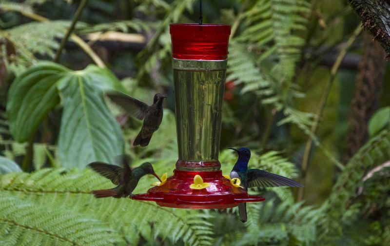 Колибри у кормушки
