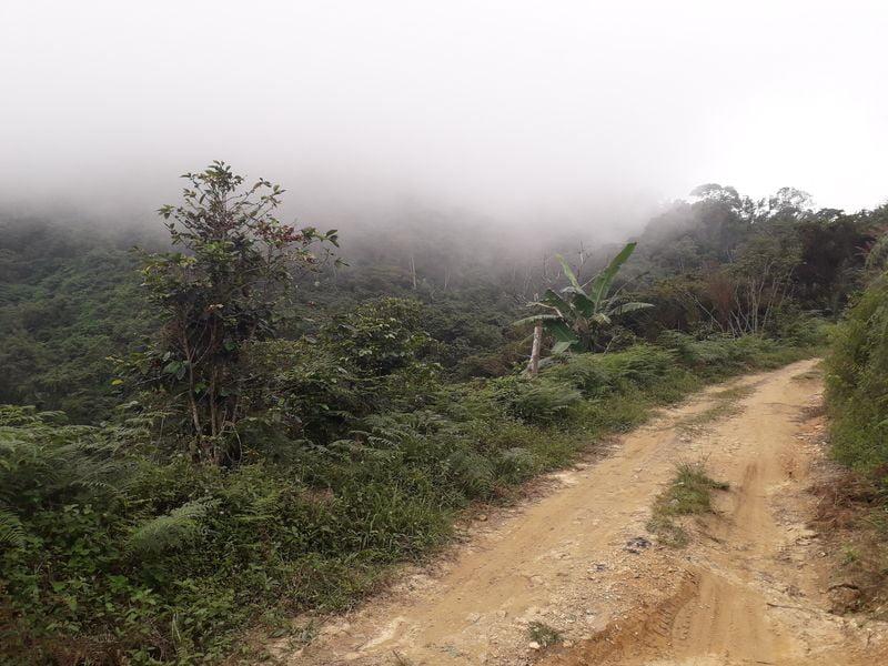 Тропа в облачном лесу