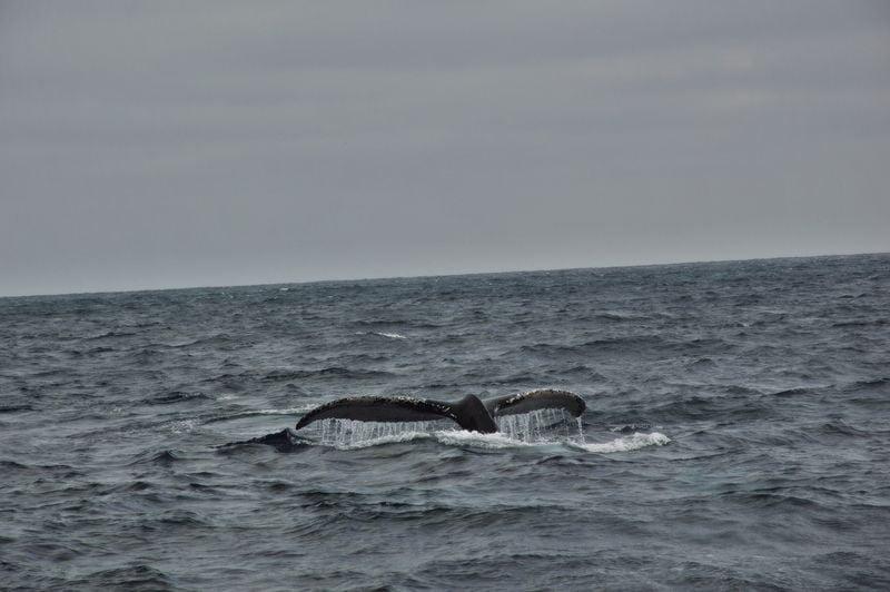Хвот кита в море