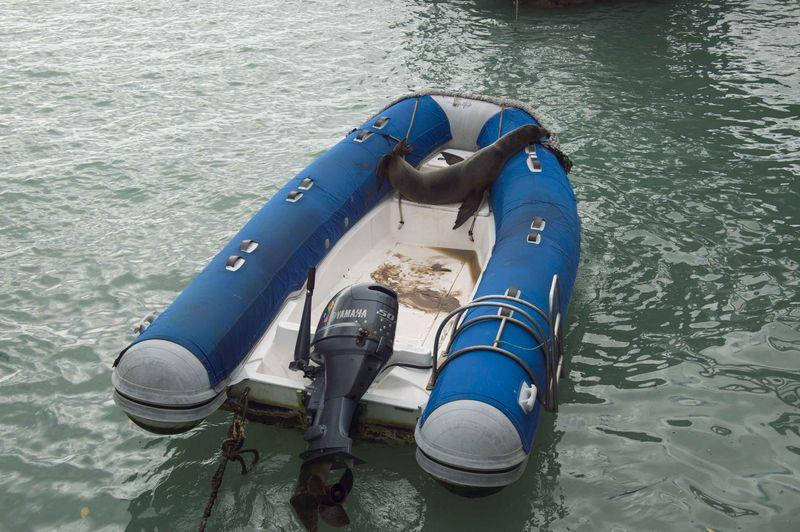Туристическая лодка с морским котиком