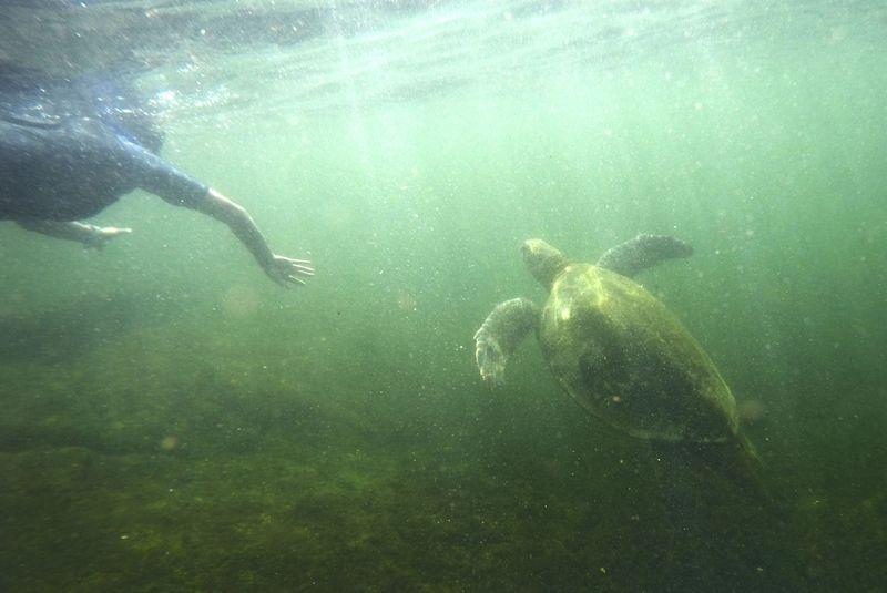 Морская черепаха в воде