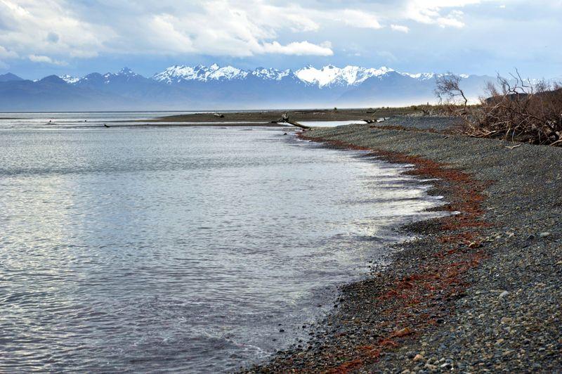 Красные водоросли, выброшенные на берег