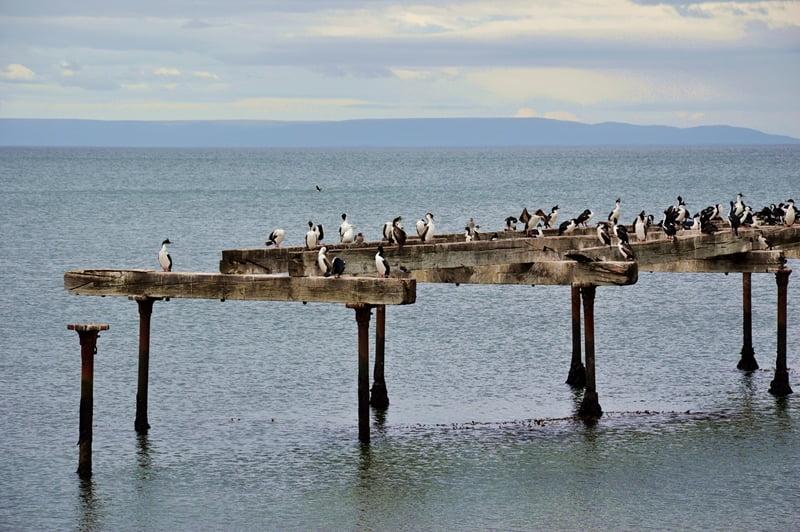 Птицы в Магеллановом проливе