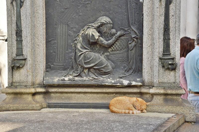 кот спит у погребального памятника