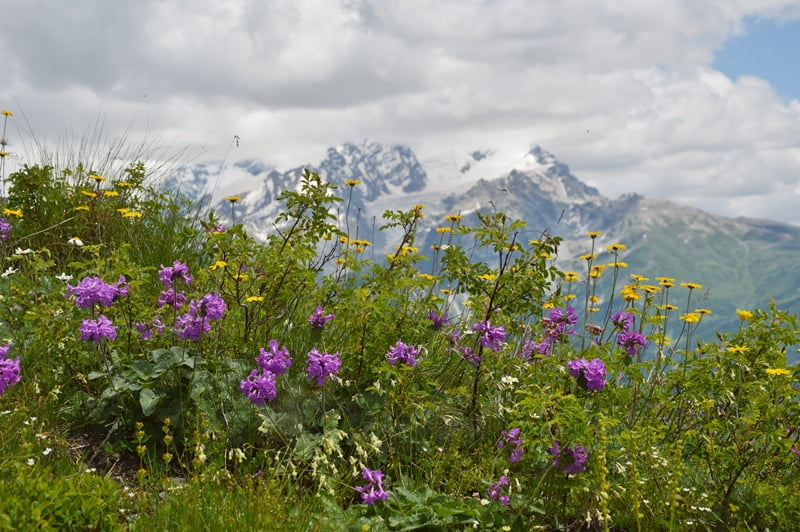 Цветы в Сванетии летом