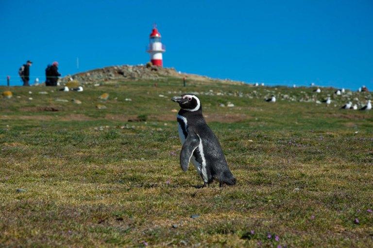 пингвин на фоне маяка