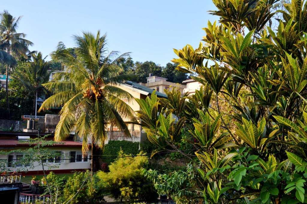 Пальма - город Канди на Шри Ланке