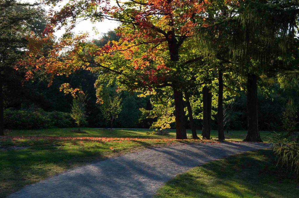 Осенний пейзаж в городе Монреаль