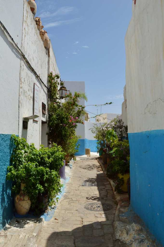 Цветы в горшках в переулке в Марокко
