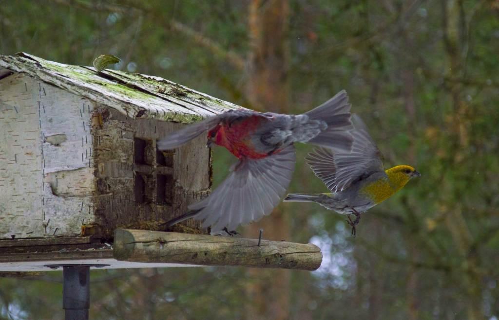 Бердвотчинг - фото птицы в полете