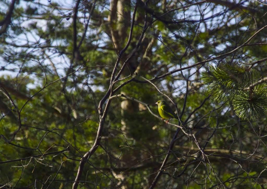 Зеленая птица на ветке