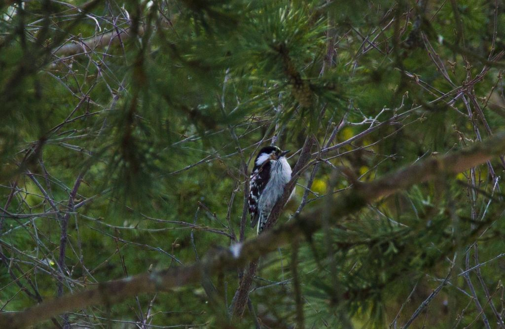Birdwatching - Лапландия