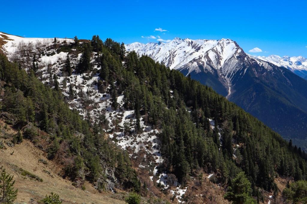 Заснеженные горы и сосны