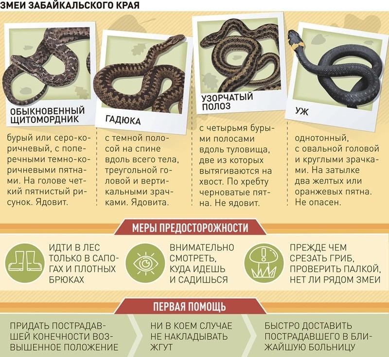 Змеи Кыргызстана