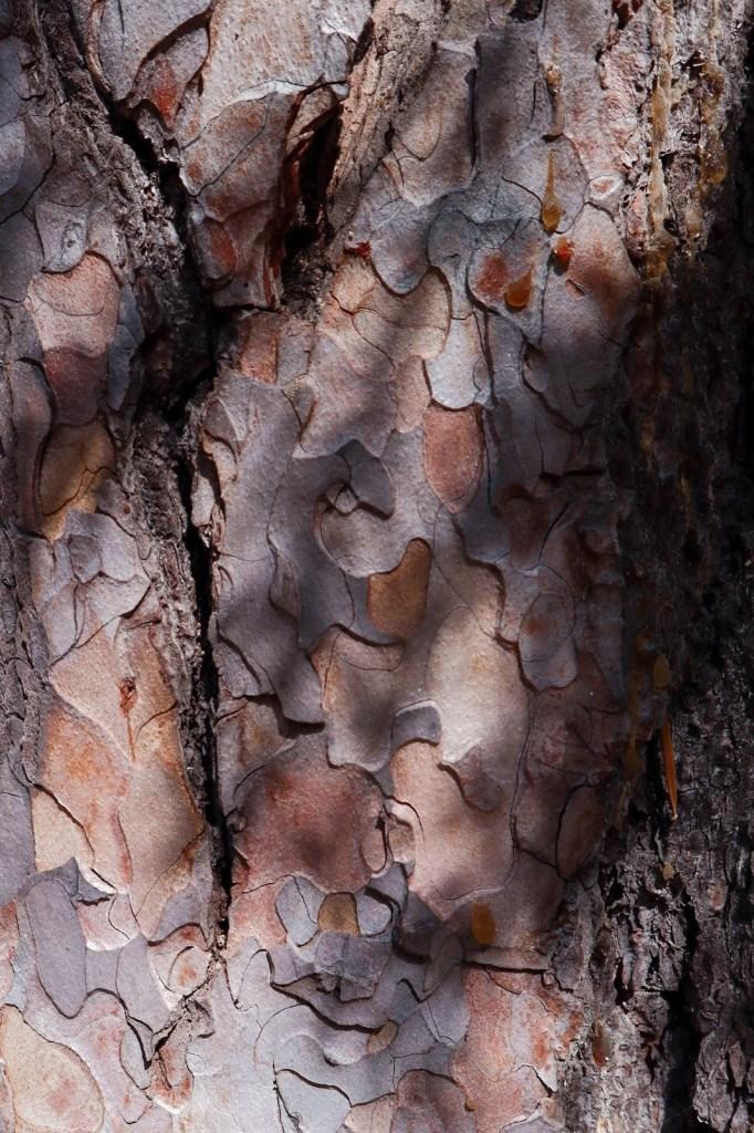 кора дерева вблизи