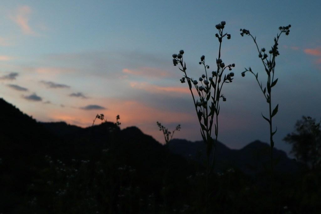 Силуэт травы на фоне заката