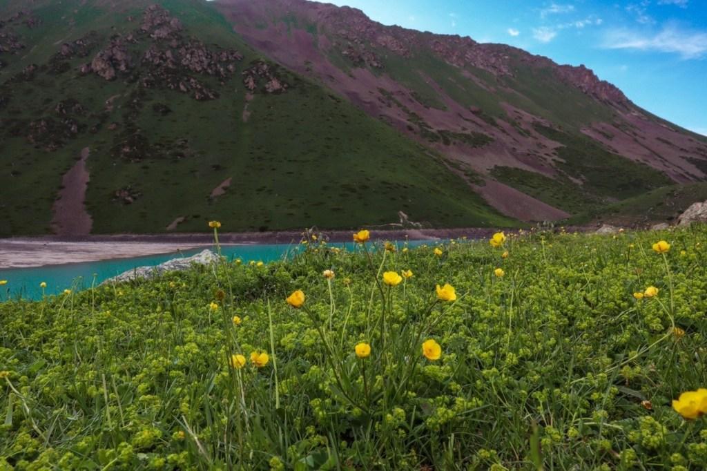 горные цветы лютики
