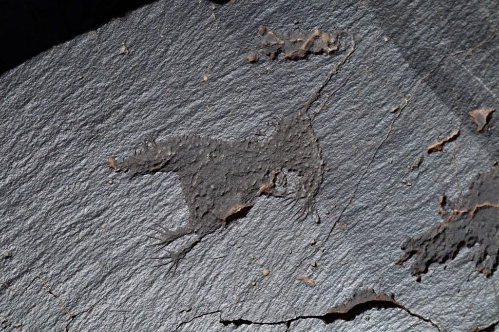 Петроглиф животного в Саймалуу Таш