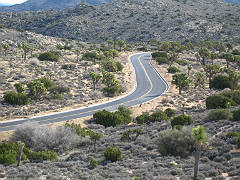 Joshua Tree National Park Road